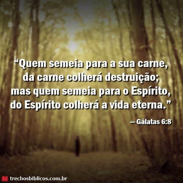 Gálatas 6:8 13
