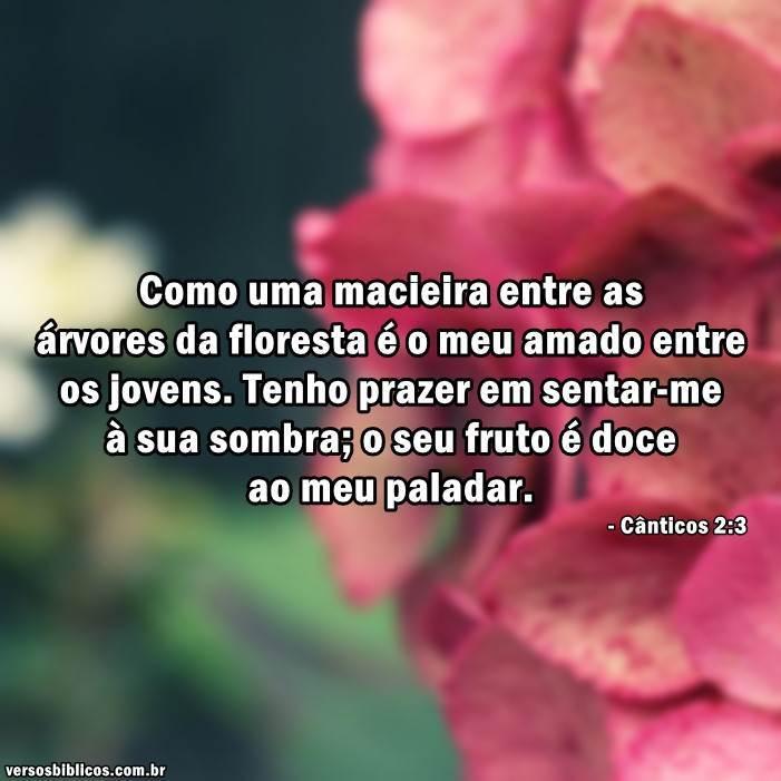Cânticos 2:3 3