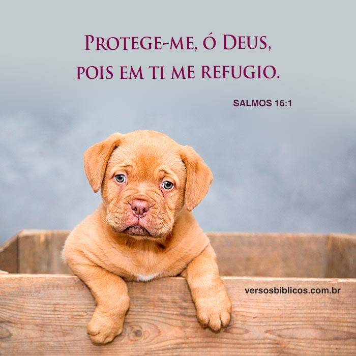 Protege-me, ó Deus 8
