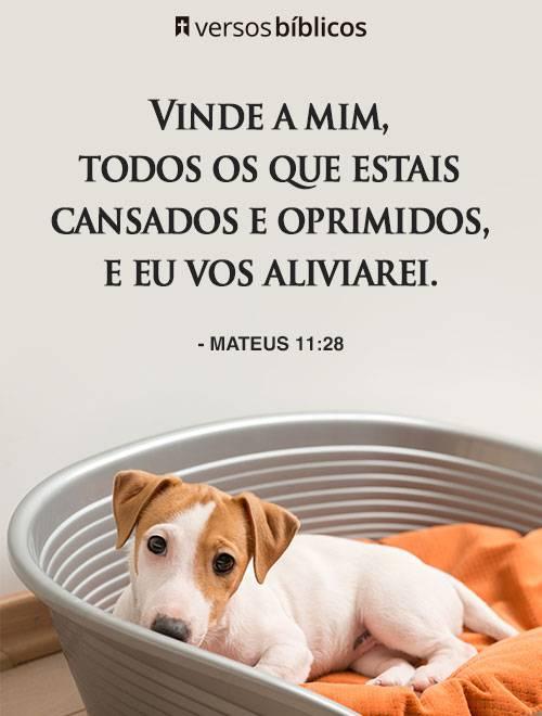 Versículos de Mateus para Refletir sobre Amor e Bençãos 3