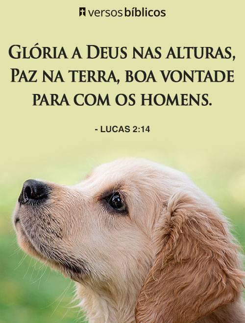 Versículos de Lucas cheios do Amor de Deus 2
