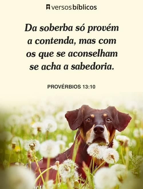 Versículos de Sabedoria com a Palavra de Deus 3